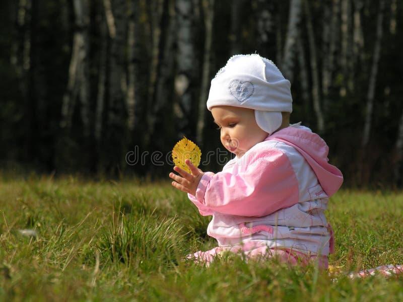 φύλλο μωρών φθινοπώρου στοκ φωτογραφίες με δικαίωμα ελεύθερης χρήσης