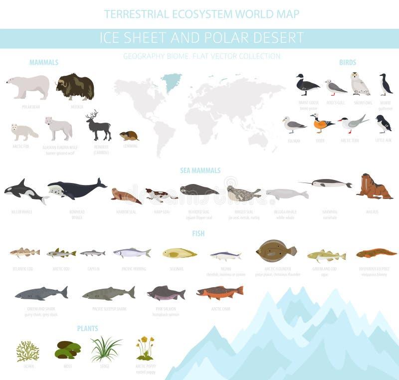 Φύλλο πάγου και πολικό biome ερήμων Επίγειος παγκόσμιος χάρτης οικοσυστήματος Αρκτικό infographic σχέδιο ζώων, πουλιών, ψαριών κα ελεύθερη απεικόνιση δικαιώματος
