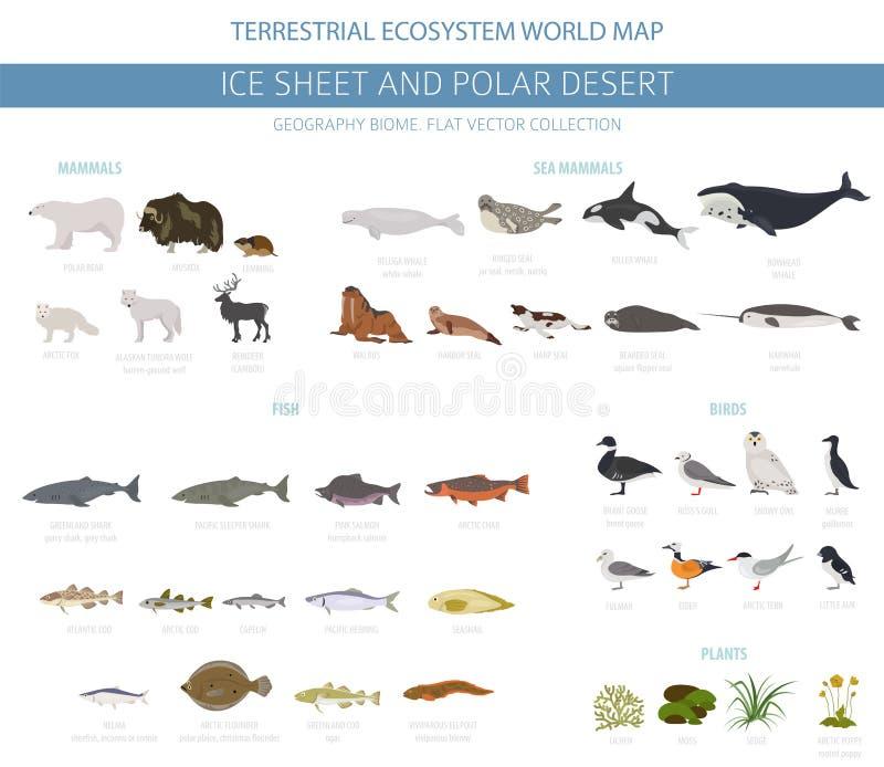 Φύλλο πάγου και πολικό biome ερήμων Επίγειος παγκόσμιος χάρτης οικοσυστήματος Αρκτικό infographic σχέδιο ζώων, πουλιών, ψαριών κα διανυσματική απεικόνιση