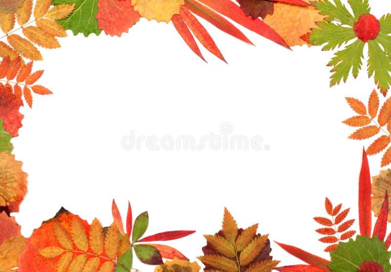 φύλλο πλαισίων φθινοπώρο&up στοκ εικόνες