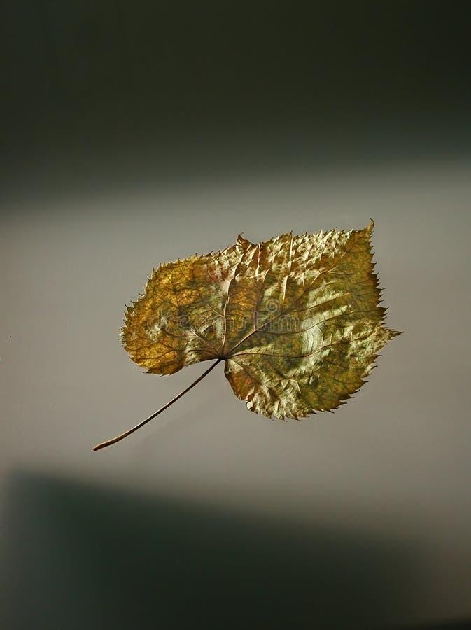 φύλλο που αναστέλλεται στοκ φωτογραφία με δικαίωμα ελεύθερης χρήσης