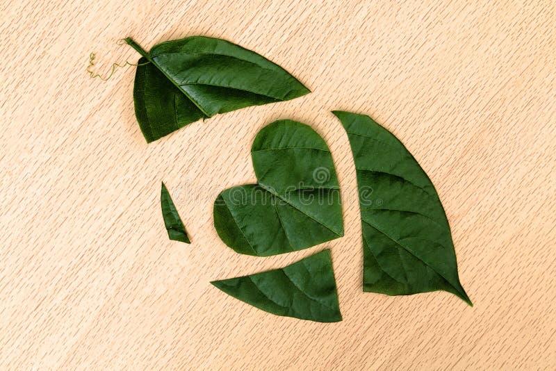 Φύλλο που κόβεται στην καρδιά μορφής στοκ φωτογραφία με δικαίωμα ελεύθερης χρήσης