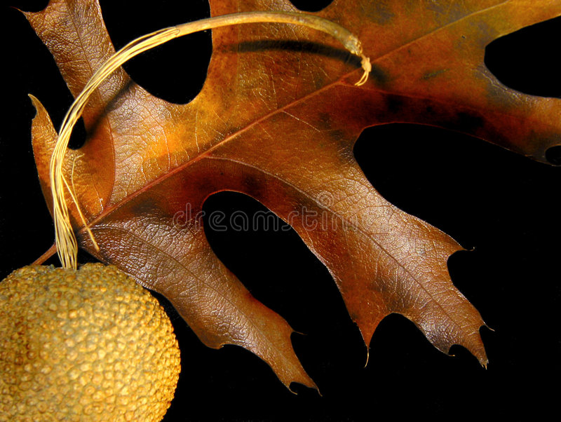 φύλλο πτώσης στοκ φωτογραφία με δικαίωμα ελεύθερης χρήσης