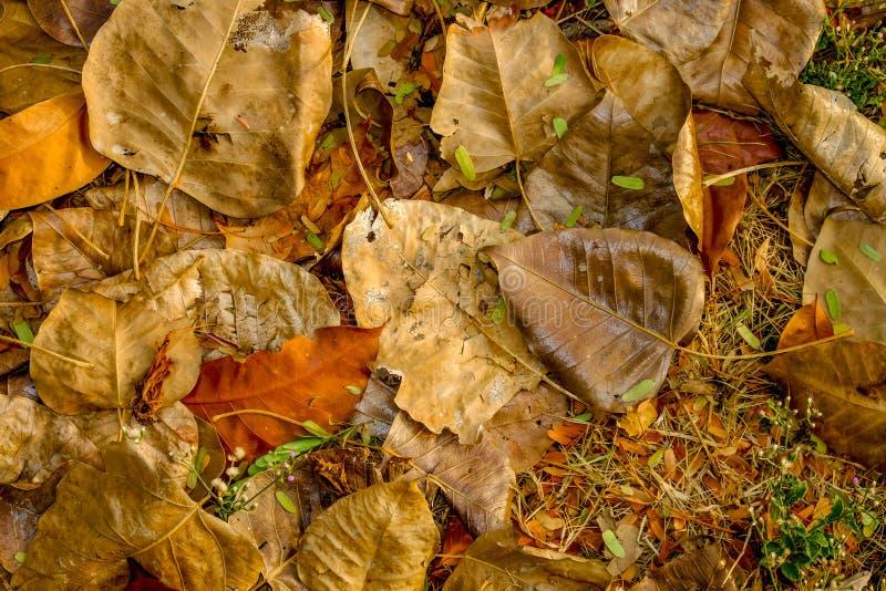 Φύλλο στο έδαφος στοκ φωτογραφίες με δικαίωμα ελεύθερης χρήσης