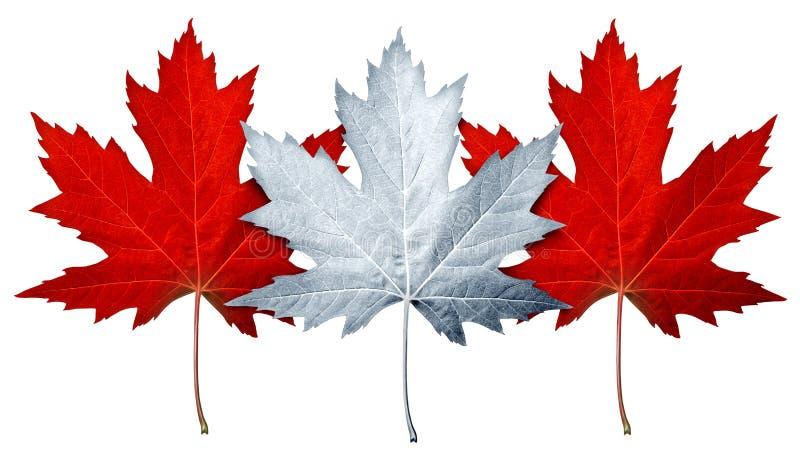 Φύλλο σφενδάμνου Καναδά στοκ εικόνα