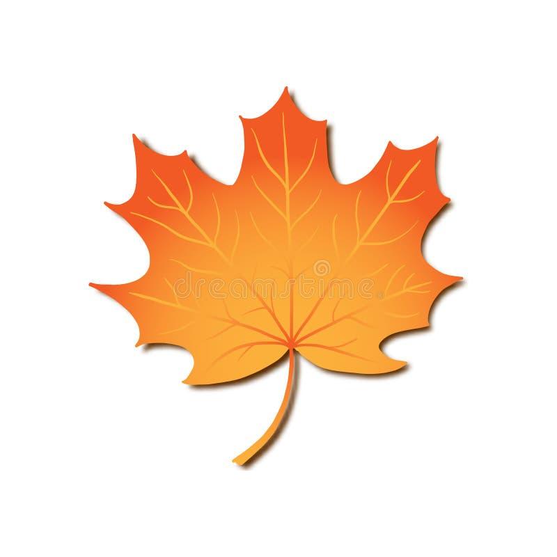 Φύλλο σφενδάμου φθινοπώρου, διανυσματικό ρεαλιστικό πορτοκαλί φύλλο που απομονώνεται στο άσπρο υπόβαθρο για το εποχιακό σχέδιο, κ διανυσματική απεικόνιση