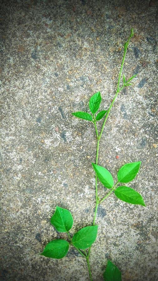 Φύλλο ταπετσαριών πρασινάδων στοκ φωτογραφίες με δικαίωμα ελεύθερης χρήσης