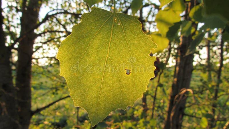 Φύλλο του δέντρου & του υποβάθρου ηλιοβασιλέματος στοκ φωτογραφίες