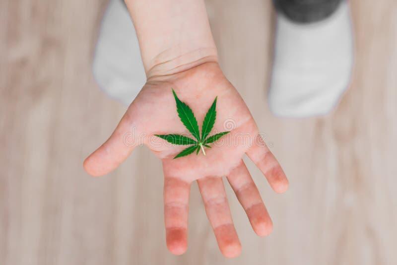 Φύλλο των καννάβεων στα χέρια ενός παιδιού παιδιών Έννοιες της χρησιμοποίησης του marihuna για ιατρικούς λόγους για τα παιδιά στοκ φωτογραφίες με δικαίωμα ελεύθερης χρήσης