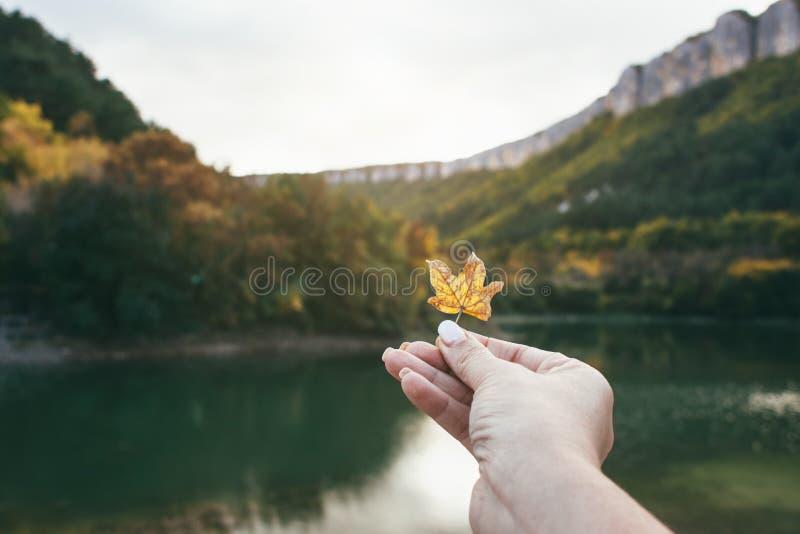 Φύλλο φθινοπώρου διαθέσιμο στοκ φωτογραφία με δικαίωμα ελεύθερης χρήσης