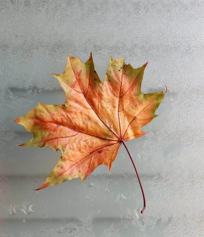 φύλλο φθινοπώρου σε ένα κρύο παράθυρο στοκ εικόνες