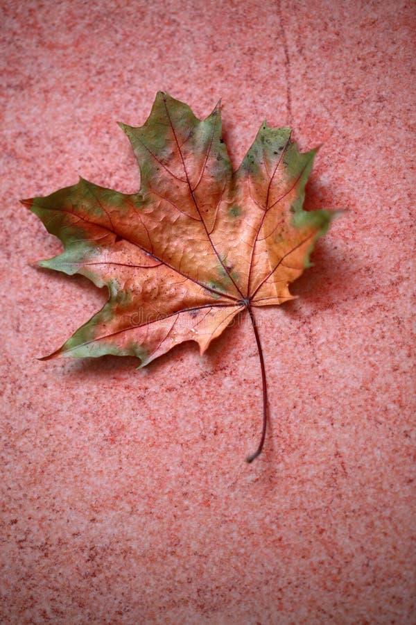 φύλλο φθινοπώρου στο κεραμίδι στοκ φωτογραφίες με δικαίωμα ελεύθερης χρήσης