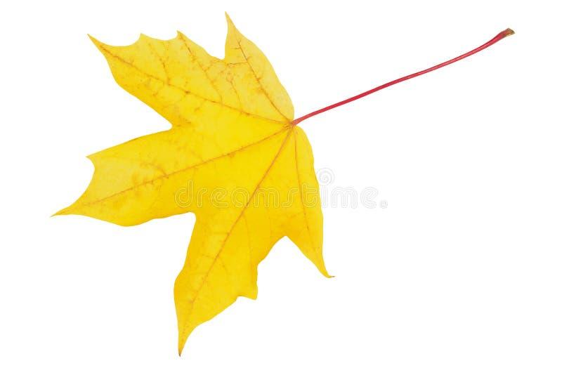 Φύλλο φθινοπώρου στο λευκό στοκ εικόνα