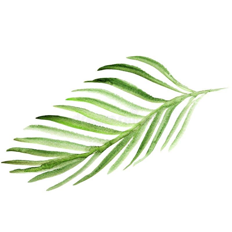Φύλλο φοινίκων Watercolor Πράσινη απεικόνιση φύλλων που απομονώνεται στο άσπρο υπόβαθρο διανυσματική απεικόνιση
