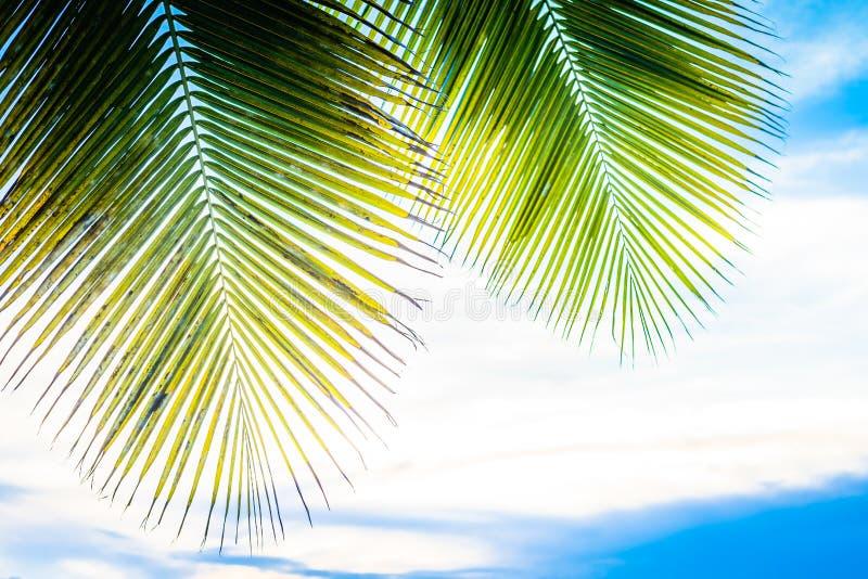 Φύλλο φοινικών και η θάλασσα Αισθανθείτε οι αέρα, θάλασσα μυρωδιά, χαλαρώνει μάτι στοκ φωτογραφίες με δικαίωμα ελεύθερης χρήσης
