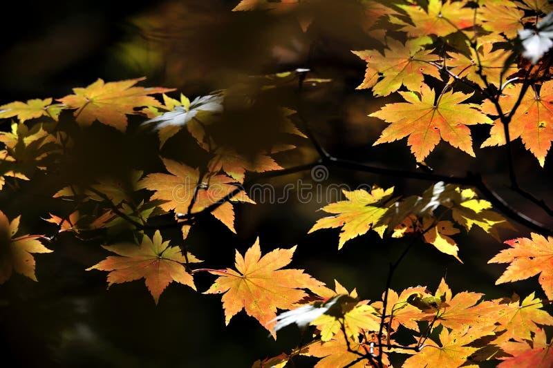 Φύλλο φτερών εποχής φθινοπώρου στοκ εικόνα με δικαίωμα ελεύθερης χρήσης