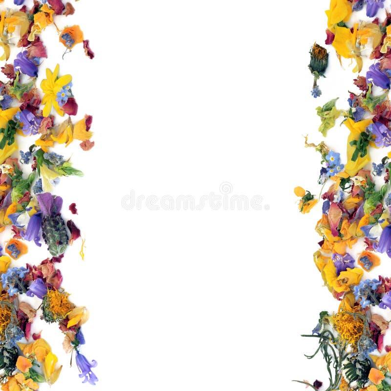 φύλλο χορταριών λουλο&upsilo διανυσματική απεικόνιση
