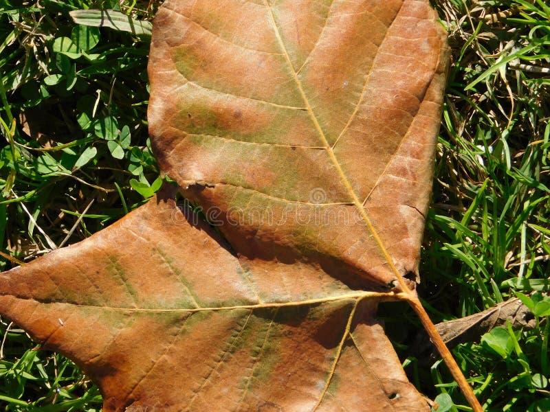 Φύλλο στοκ εικόνα