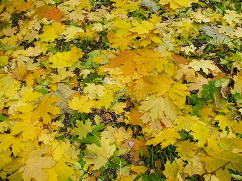 Φύλλωμα Κιτρινοπράσινα φύλλα φθινοπώρου στο έδαφος στοκ φωτογραφία με δικαίωμα ελεύθερης χρήσης