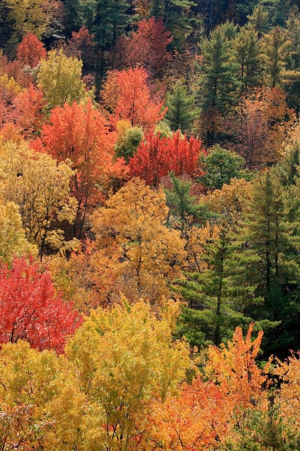 φύλλωμα Οντάριο φθινοπώρου στοκ φωτογραφία με δικαίωμα ελεύθερης χρήσης