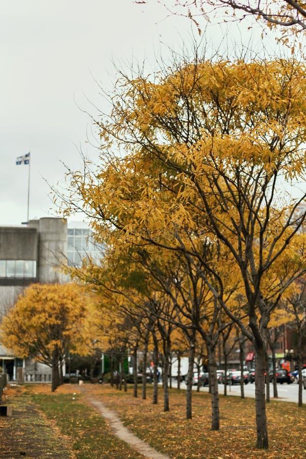 Φύλλωμα πτώσης στο Μόντρεαλ, Κεμπέκ στοκ εικόνες με δικαίωμα ελεύθερης χρήσης