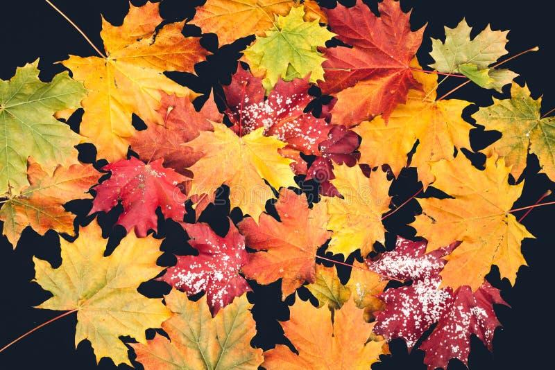 Φύλλωμα φθινοπώρου στα διαφορετικά χρώματα στοκ φωτογραφία με δικαίωμα ελεύθερης χρήσης