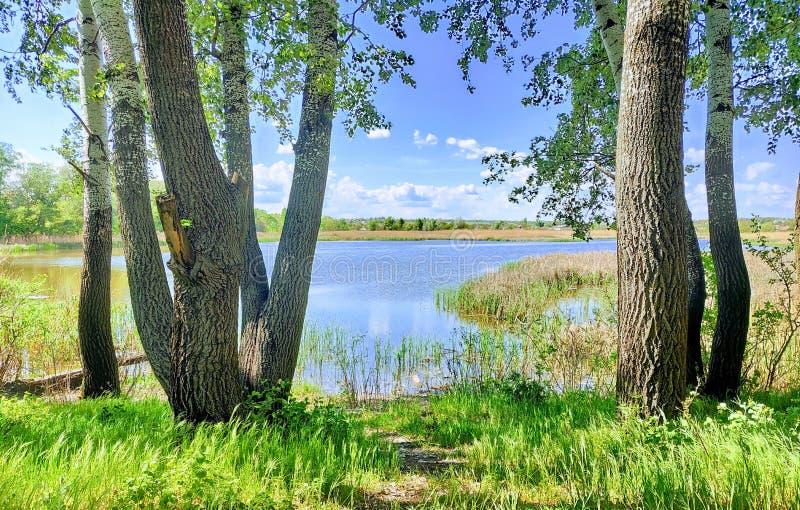 Φύση από το όνειρο στοκ φωτογραφίες με δικαίωμα ελεύθερης χρήσης