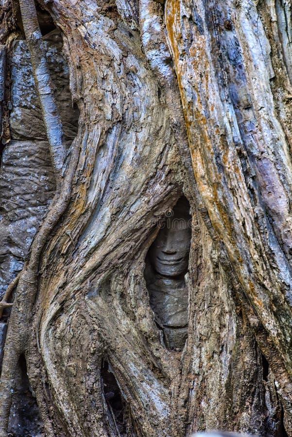 Φύση εναντίον του ατόμου Ένα κρυμμένο πρόσωπο χαμόγελου, που καταπίνεται επάνω από το τεράστιο s στοκ εικόνες με δικαίωμα ελεύθερης χρήσης