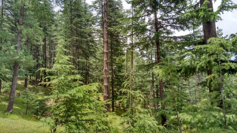 Φύση και άγρια φύση σε Shimla στοκ εικόνες