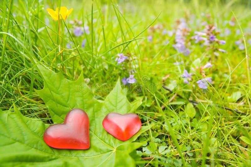 φύση καρδιών στοκ φωτογραφία