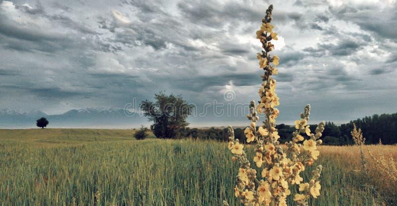 Φύση Κιργιστάν στοκ εικόνες με δικαίωμα ελεύθερης χρήσης