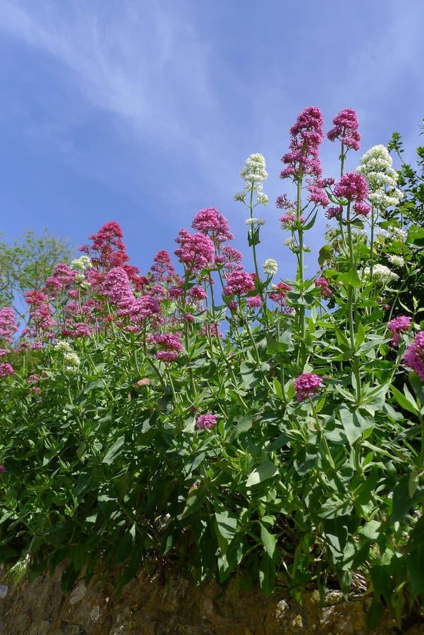 Φύση Κορνουάλλη, νότια Αγγλία στοκ εικόνα
