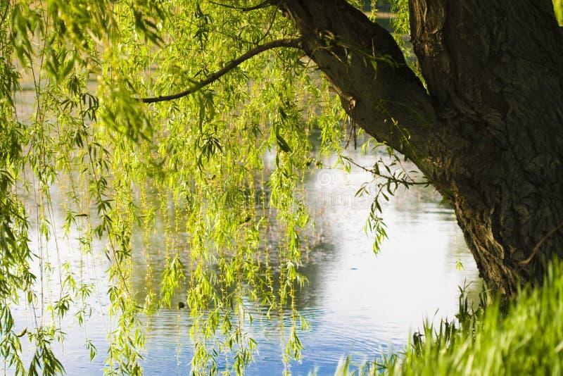 φύση λιμνών στοκ φωτογραφία με δικαίωμα ελεύθερης χρήσης