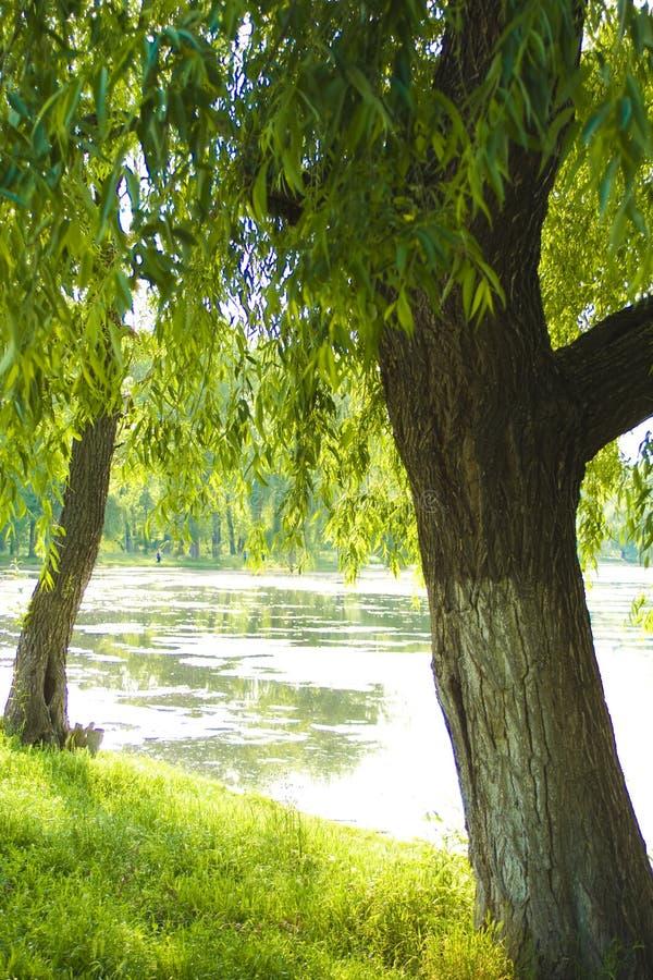φύση λιμνών στοκ φωτογραφίες με δικαίωμα ελεύθερης χρήσης