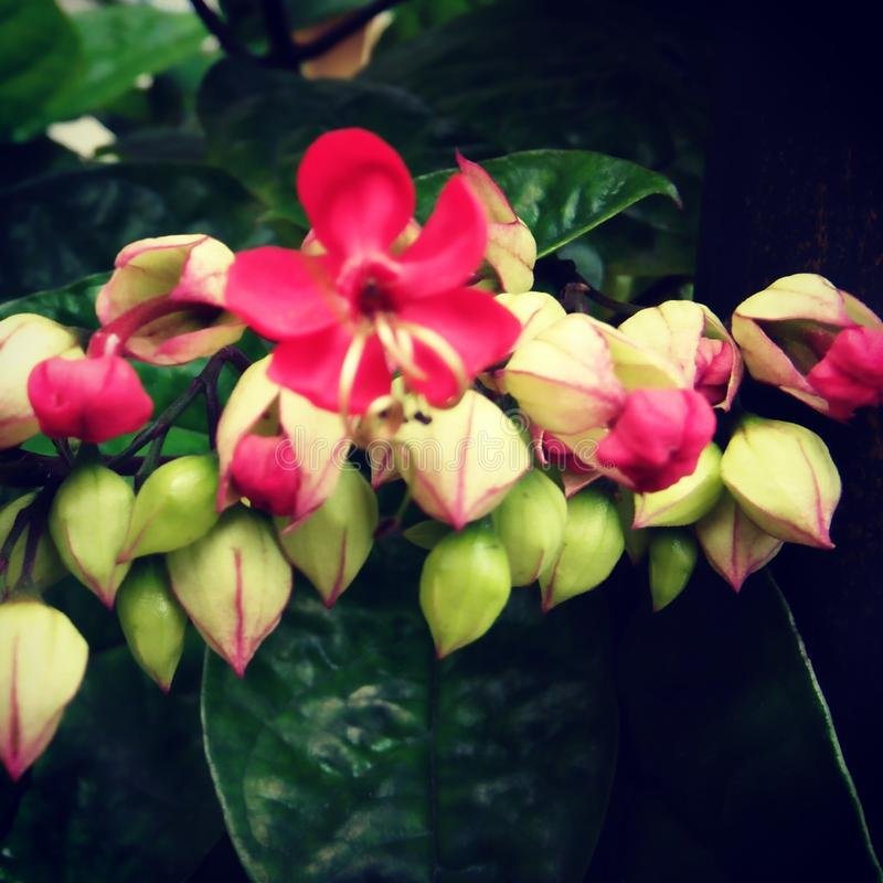 Φύση λουλουδιών στοκ εικόνες