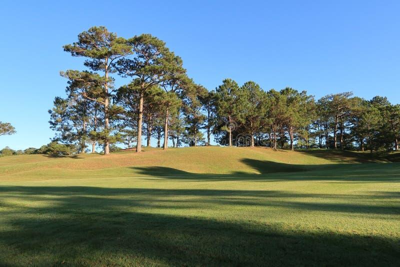 Φύση με τα μαγικά sunrays, την ηλιοφάνεια, την ελαφριά και πράσινη χλόη, λιβάδι Χρήση φωτογραφιών στο σχέδιο ιδέας για το γκολφ,  στοκ φωτογραφία με δικαίωμα ελεύθερης χρήσης