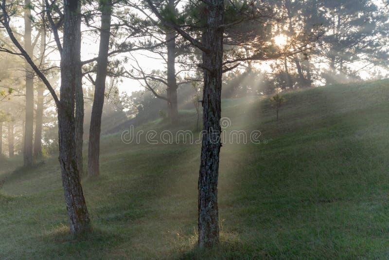 Φύση με τα μαγικά sunrays, την ηλιοφάνεια, την ελαφριά και πράσινη χλόη, μέρος 2 λιβαδιών στοκ φωτογραφία