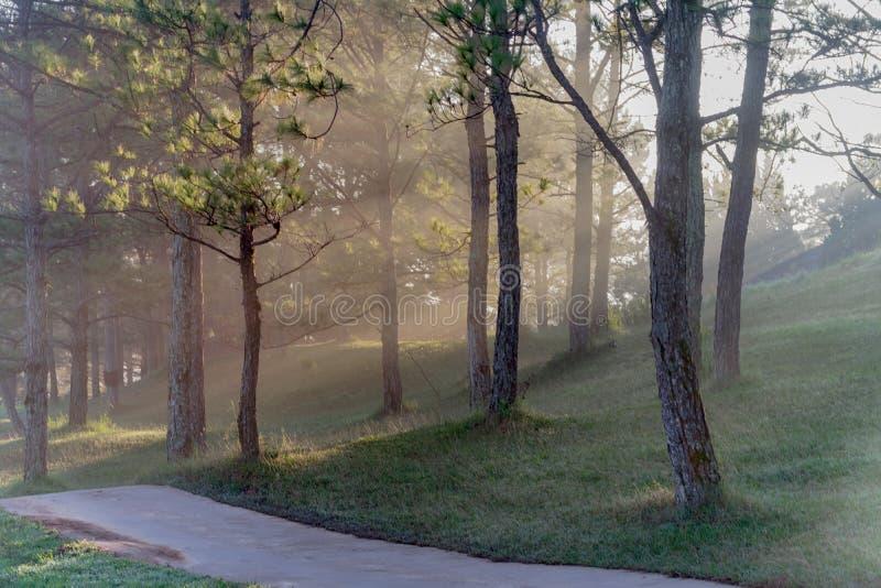 Φύση με τα μαγικά sunrays, την ηλιοφάνεια, την ελαφριά και πράσινη χλόη, μέρος 3 λιβαδιών στοκ φωτογραφία
