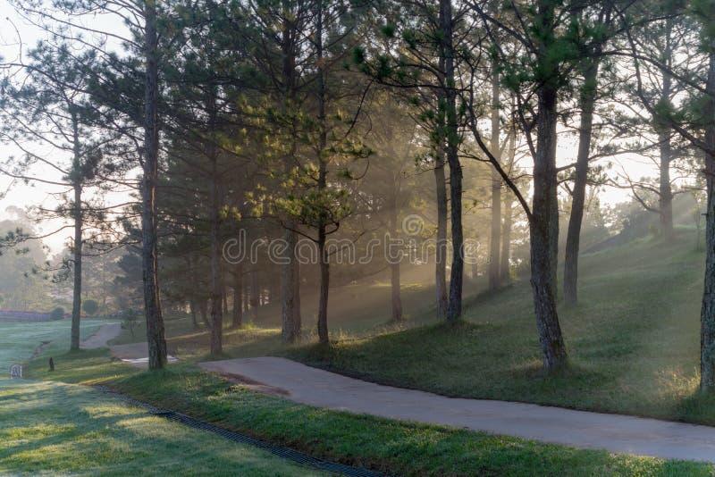 Φύση με τα μαγικά sunrays, την ηλιοφάνεια, την ελαφριά και πράσινη χλόη, μέρος 8 λιβαδιών στοκ φωτογραφίες
