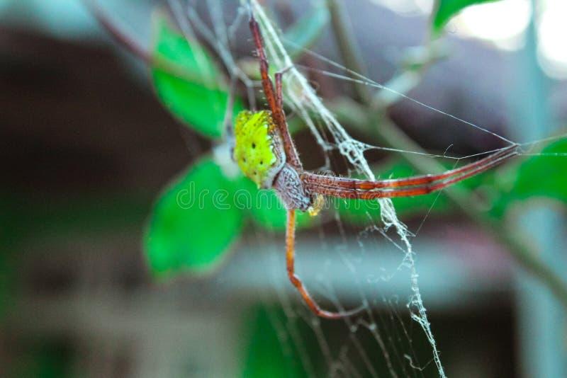 Φύση - μια αράχνη και η φωλιά του στοκ φωτογραφίες