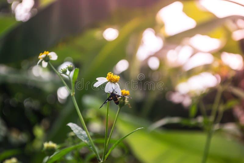φύση λουλουδιών πεταλούδων ανασκόπησης στοκ εικόνες