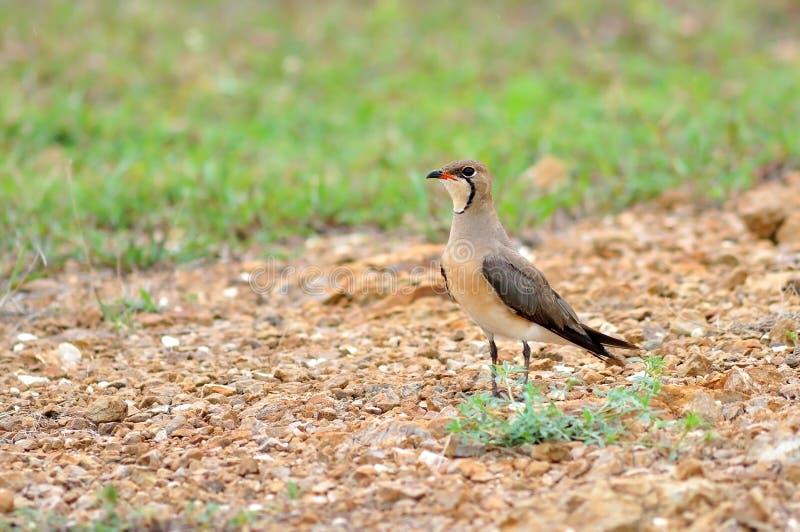 φύση πουλιών στοκ φωτογραφίες
