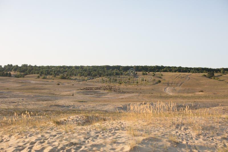 Φύση στέπα Άμμος τοπίο περιοχής συντήρησης στοκ φωτογραφία με δικαίωμα ελεύθερης χρήσης
