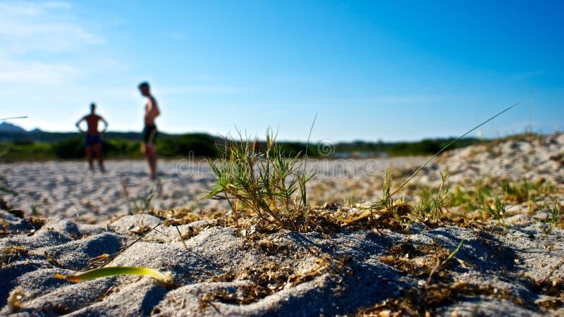 Φύση στην παραλία στοκ εικόνες με δικαίωμα ελεύθερης χρήσης