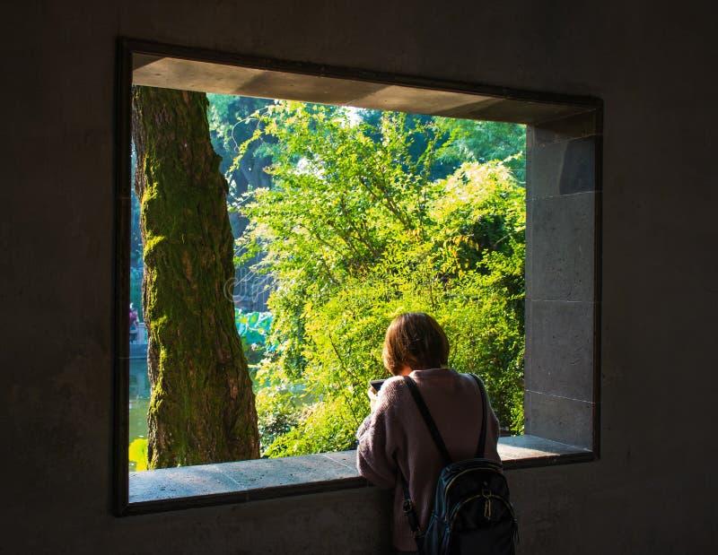 φύση στο παράθυρο στοκ εικόνα
