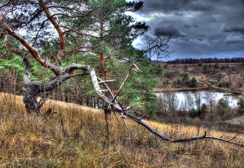 Φύση της περιοχής Cherkasy στοκ εικόνα με δικαίωμα ελεύθερης χρήσης