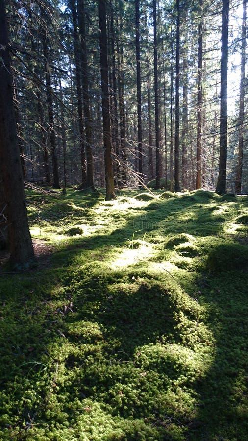 Φύση της Φινλανδίας στοκ φωτογραφία με δικαίωμα ελεύθερης χρήσης