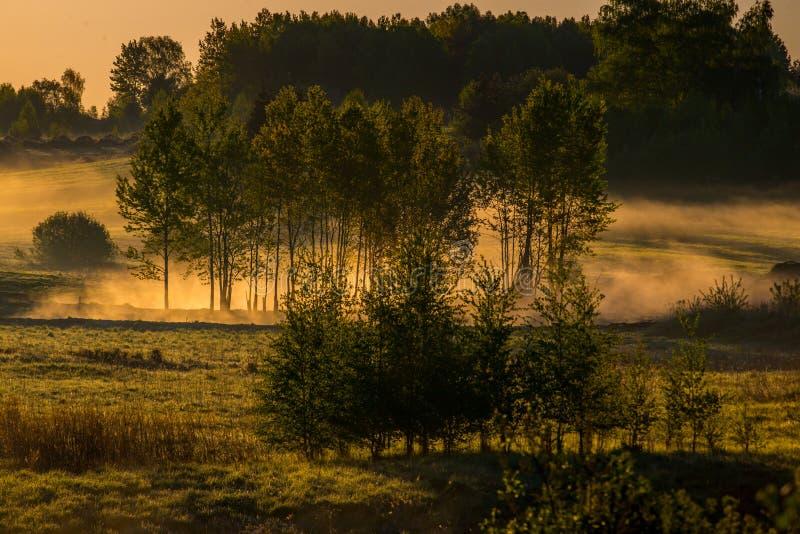 Φύση τοπίων της Misty την άνοιξη στοκ φωτογραφία