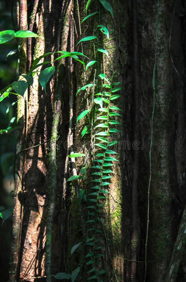 Φύση του εθνικού πάρκου Gunung Mulu Sarawak, Μαλαισία στοκ φωτογραφίες