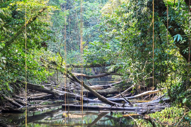 Φύση του εθνικού πάρκου Gunung Mulu Sarawak, Μαλαισία στοκ φωτογραφία με δικαίωμα ελεύθερης χρήσης
